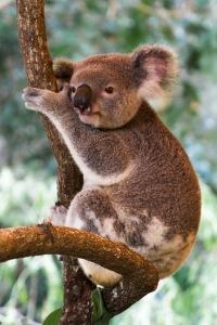 My farts smell like eucalyptus