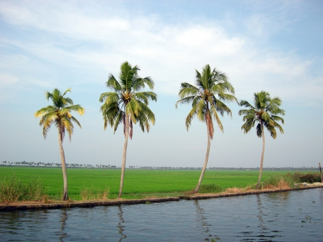 coconut-trees-2-1359166-1280x960